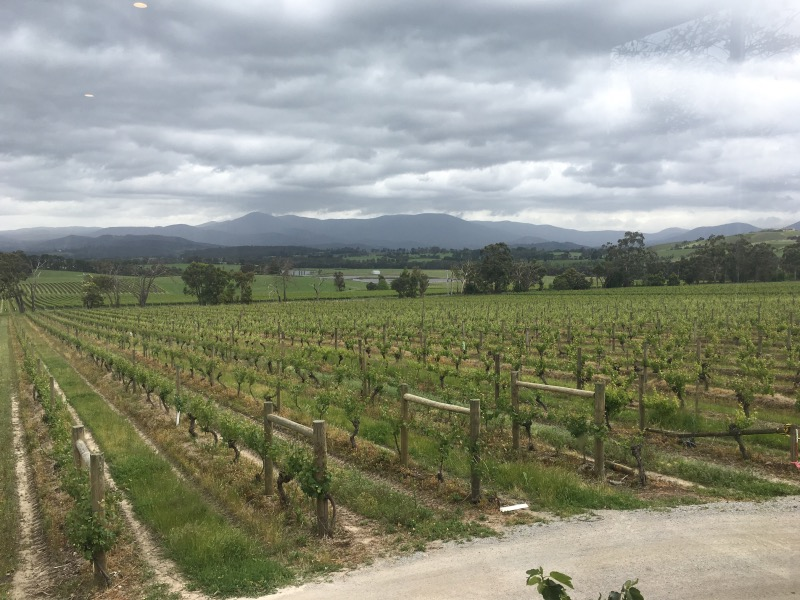 YARRA YERING VINEYARDS Victoria