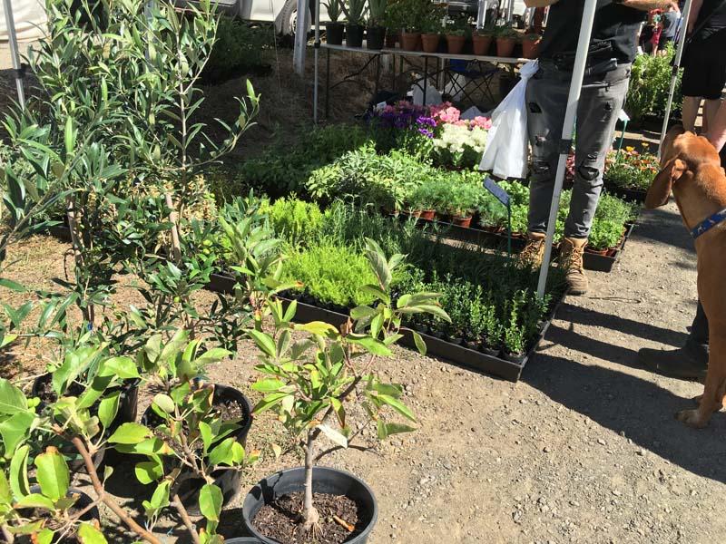 Daylesford Sunday Market plants