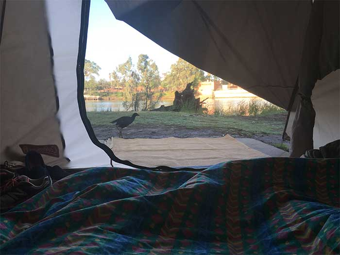 View from our tent in the morning Mildura